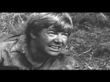 Где 042? (1969). HD 1080