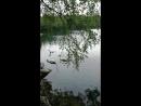 Чёрные и белые лебеди