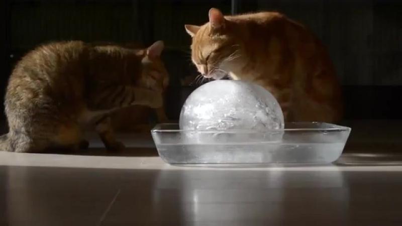 Котики и ледяной шар