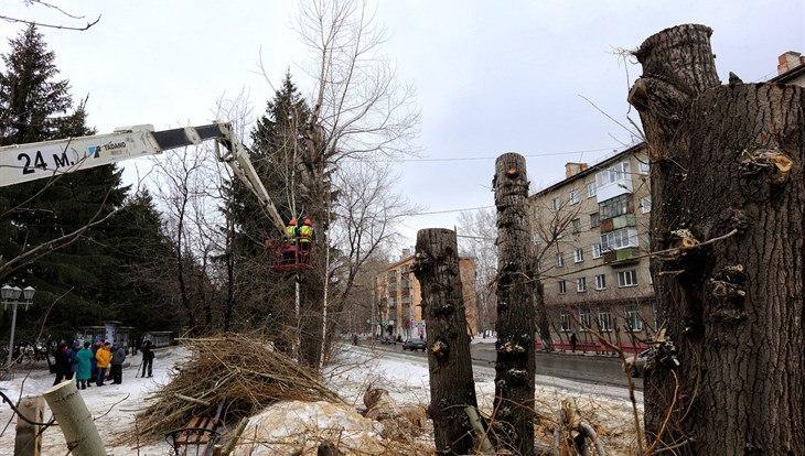 Томичи могут проголосовать, рябины, ели или липы высадить на Кирова