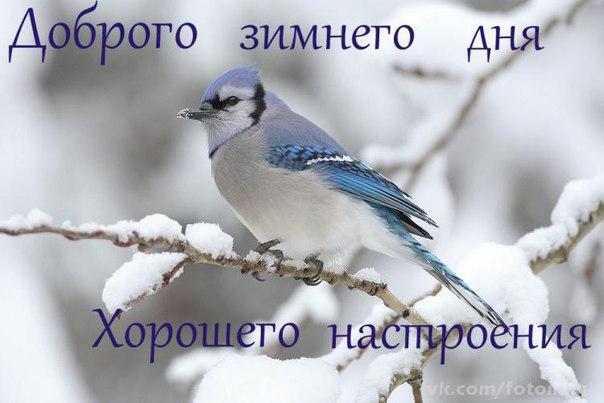 https://pp.userapi.com/c834203/v834203499/4cc6e/MJe5XzusyVM.jpg