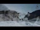 Стая' Белый плен (видео из фильма) HD2