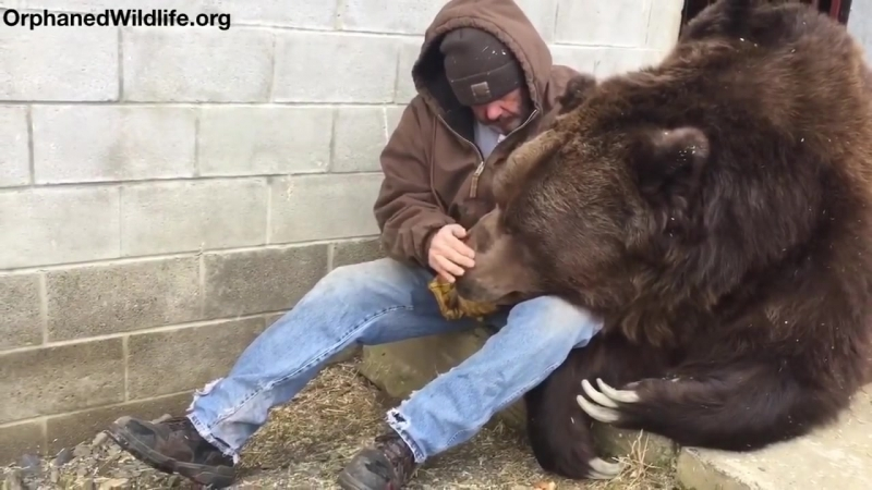 When your bear had a hard day and needs some extra love.mp4
