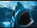 Фильм Ужасов про акул - Синяя бездна