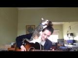 Кот Джордж помогает хозяйке играть на гитаре