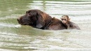 Animal Heroes | Amazing Videos Of Animals - Help To Save The Life Of Other Animals |