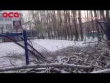 Рубили деревья – сломали забор. Это история из жизни Ачинска