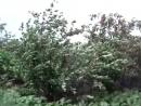 10 июль 2008 йур йуреж вишня video138772802 456239701