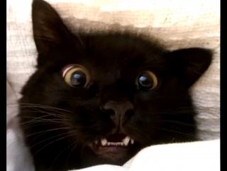 Топ 10 смешных котиков 2015!