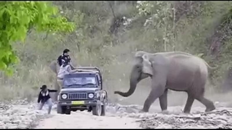 пранк-слон-гиф-4489319