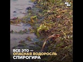 Побережье Байкала захватила опасная водоросль