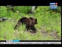 Медведь задрал мужчину в тайге Усть Илимского района
