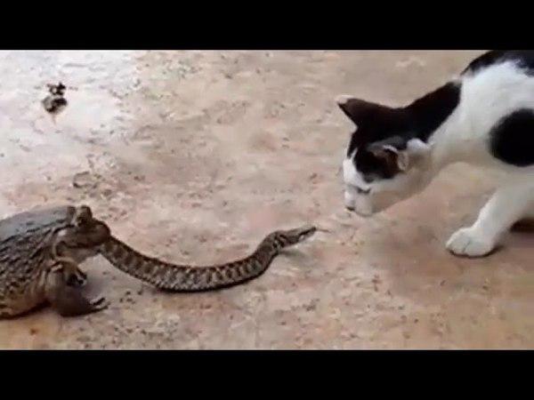Frog Snake Cat