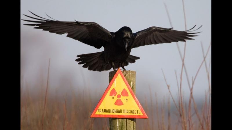 «Секунды до катастрофы» - Чернобыль