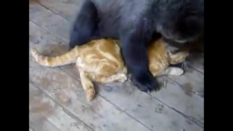 Медвежонок и кот-воспитатель