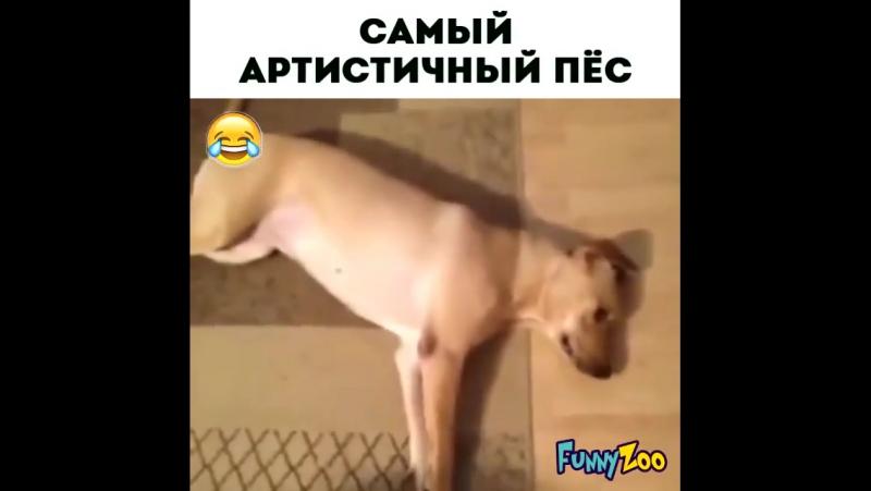Самый артистичный пёс