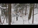 Спас медведицу от волков