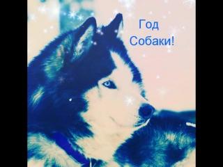 С новым годом от Деревни ездовых собак Серебро Севера!