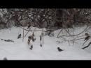 Воробьиная жизнь-1