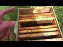 Как и когда подставлять вощину Правила пчеловодства
