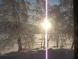 Прогулки по зимнему лесу!
