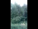 Video a83633d73e995ec9399c66a62c0428b0
