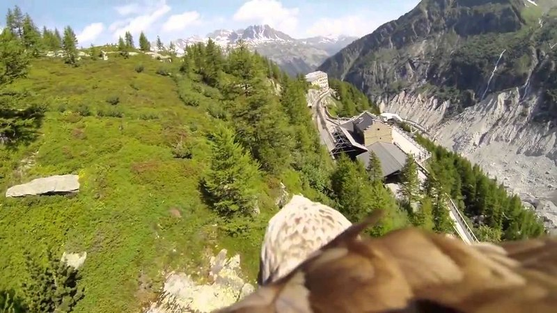 Камера на Орле Flying eagle point of view HD