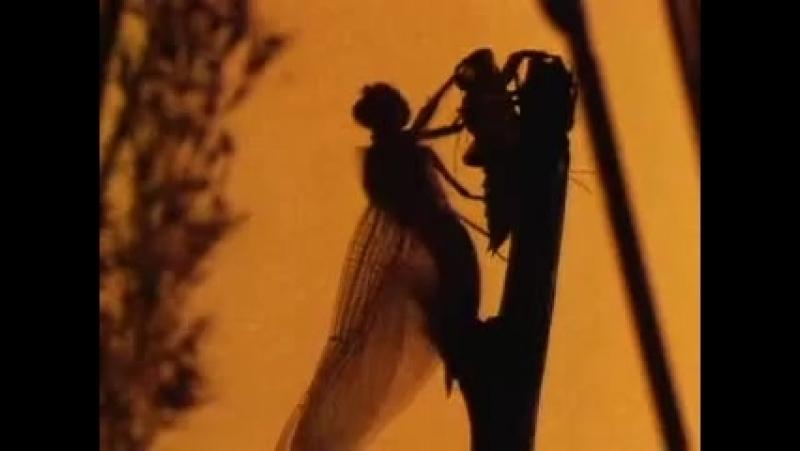 BBC: Империя чужих. Насекомые / Alien Empire 1