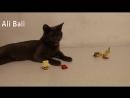 кошка играет ,кот прикол , Забавные животные видео 25