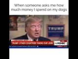 Когда меня спрашивают сколько денег я трачу на своих собак