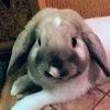 Декоративные кролики г.Барнаул