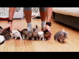 Попытка собрать 10 котят вместе для фото