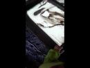 Работа. Рисуем песком на световых столах (*^﹏^*)
