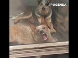 Cтранная и нормальная собаки