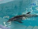 Про мальчика и дельфина