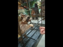 контактный зоопарк еноты 💖
