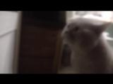 Кот очень смешно говорит_ открой дверь! _ cat asks to open the door _D
