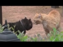 Коты дерутся с озвучкой из Джентльмены удачи :)