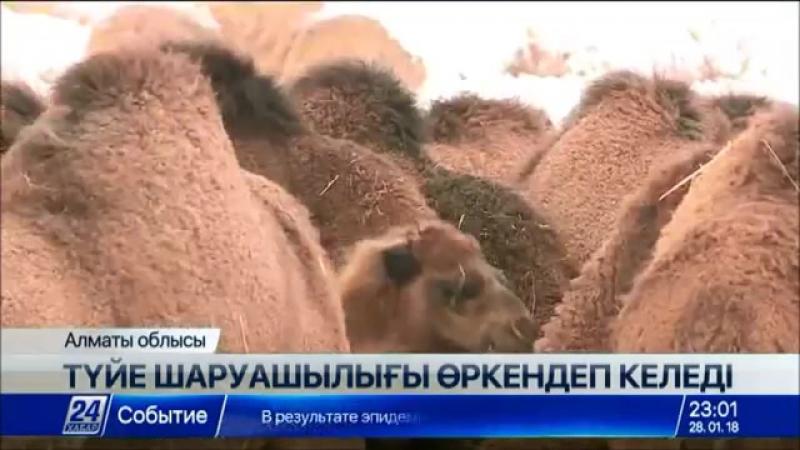 Алматы облысындағы ауыл Ресейге шұбат экспорттап отыр