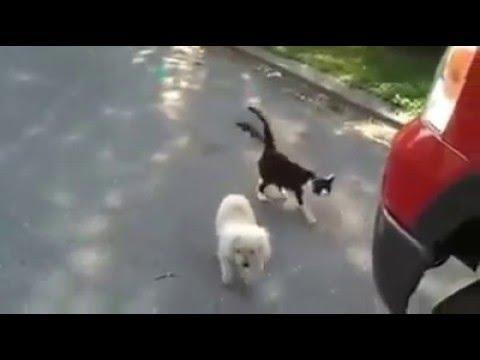 Gatinha orienta cão cego a não trombar contra o carro