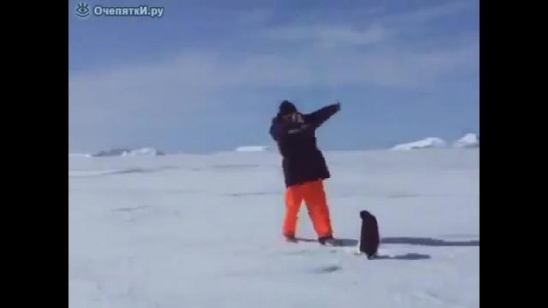 Опасный пингвин))