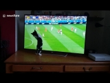 Cute kitten tries to grab ball while watching World Cup match on TV