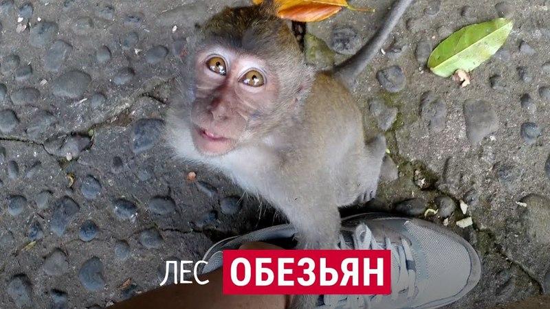 Кусают ли обезьяны туристов Рай на Бали