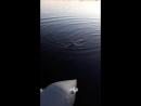 вторая рыбалка в жизни на щуку