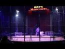 Цирк Максимус редкий тигр альбинос - 02.12.17