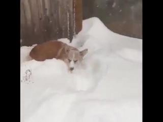 Снеголаз ...и дорожка для хозяев готова!