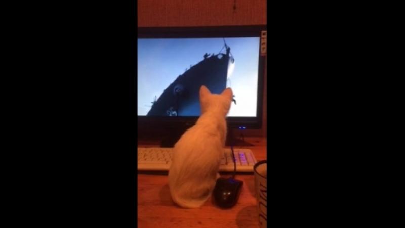 Самая умная кошка-киноман в мире!