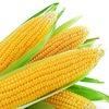 """Семена кукурузы и пшеницы """"АгроМир-Сидс"""""""