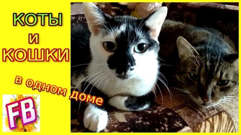 FB Кошачьи будни Любовь Прятки и другое