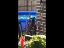 Dog Looks Guilty After Being Caught in Swimming Pool